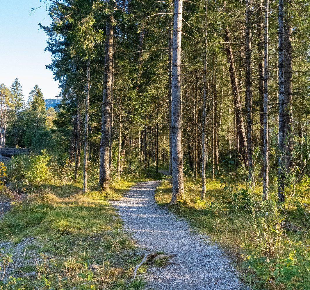 Jakobsweg Lechtal Abschnitt im Wald