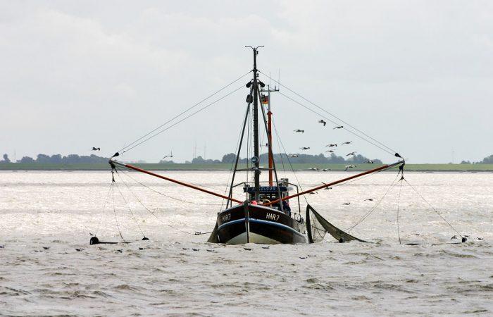 Fischkutter mit Möwen in der Nordsee